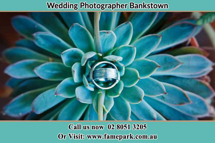 Photo of the wedding ring design at the top of the plant Bankstown NSW 2200